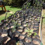 Introduction of the Tree Nursery